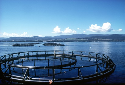 Image of salmon farming cages at sea in Tasmania.
