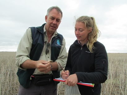 Two CSIRO researchers in wheat field examining a caught mouse.