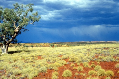 An arid open red soil plain with spinifex grasses and one tree with a dramatic grey sky