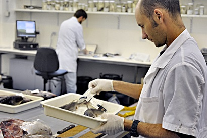 Two scientists wearing white lab coats in a room, one looking at a tray containing preserved fish specimens.