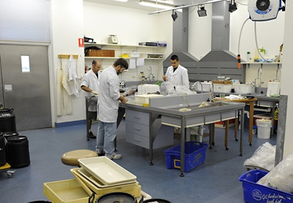 Three scientists wearing lab coats standing at a large stainless steel table examining fish specimens.