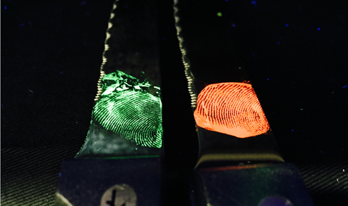 Close up view of fingerprints glowing with MOF crystals.