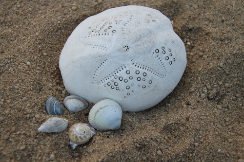 Seashells of various size and shape sitting on sand.