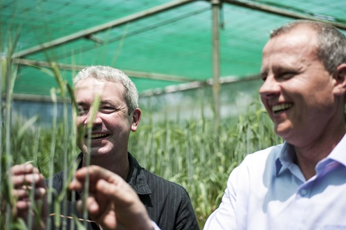 Two men standing in a glasshouse looking at green barley plants.