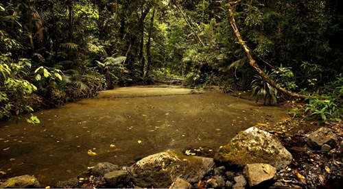Mobo Creek surrounded by lush vegetation, Northern Queensland.