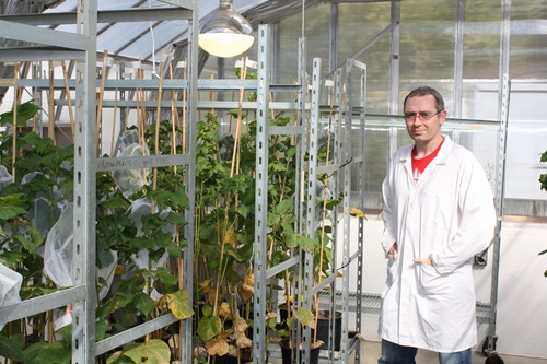 CSIRO scientist Tom Walsh working in the greenhouse