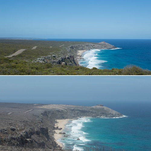 Before and after pictures of the Remarkable Rocks lookout, Kangaroo Island; top image shows large section of highly vegetated land leading up to the coast and headland; bottom image shows entre section burnt out.