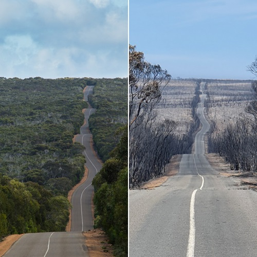 Before and after pictures of the road through Flinders Chase National Park, Kangaroo Island, LHS: show highly vegetated land, RHS: shows almost all vegetation burnt away.