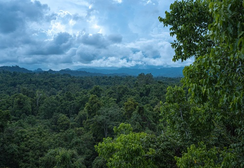 A view across primary forest canopy at Baitabag village, Madang Province, Papua New Guinea with cloudy sky in the distance.