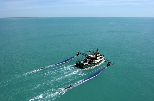 A prawn trawler seen from above on blue ocean water