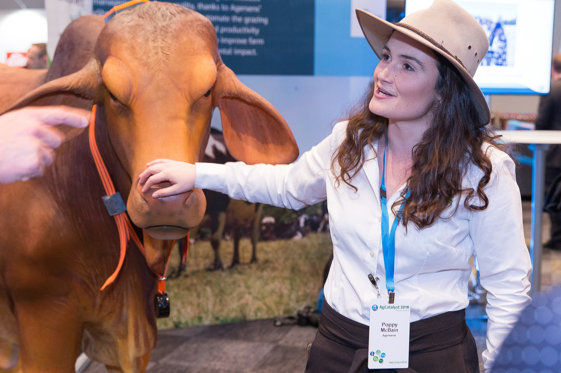 A model bull wears a virtual fencing collar next to a woman in an Akubra hat