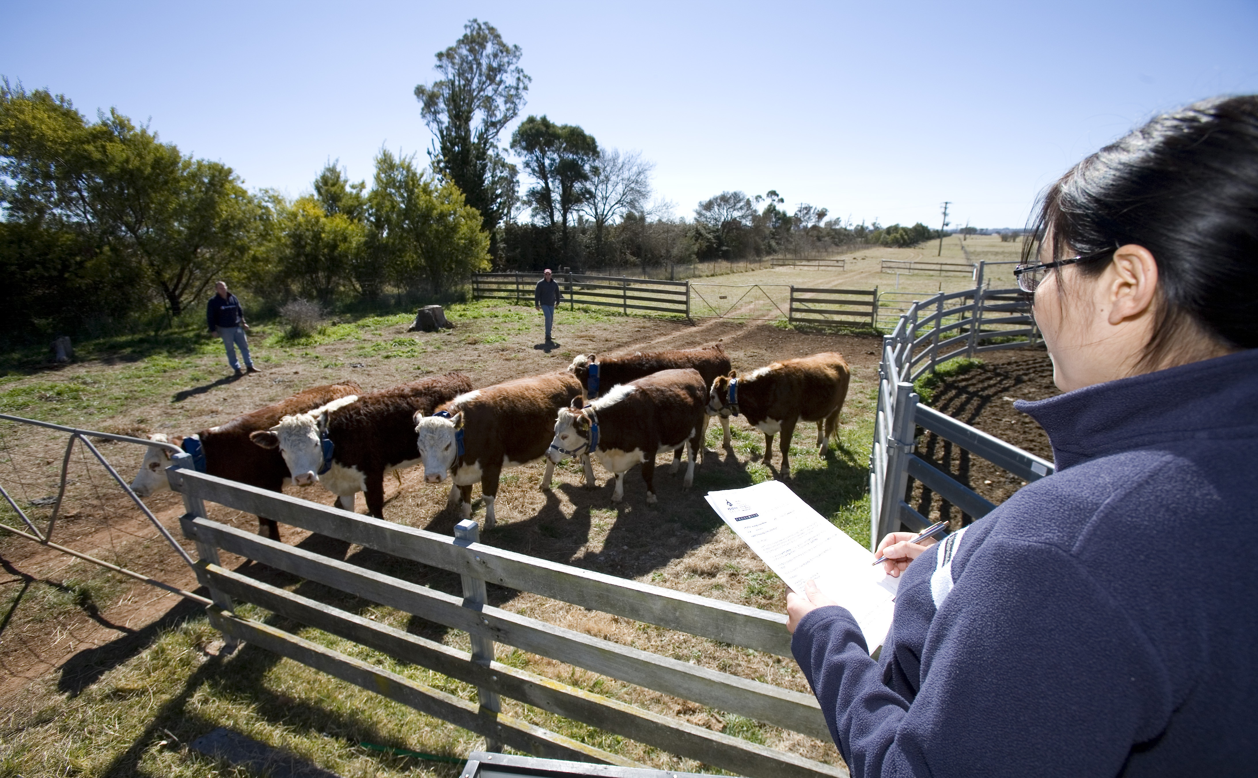 A woman standing beside a cattle yard recording information on a notepad.