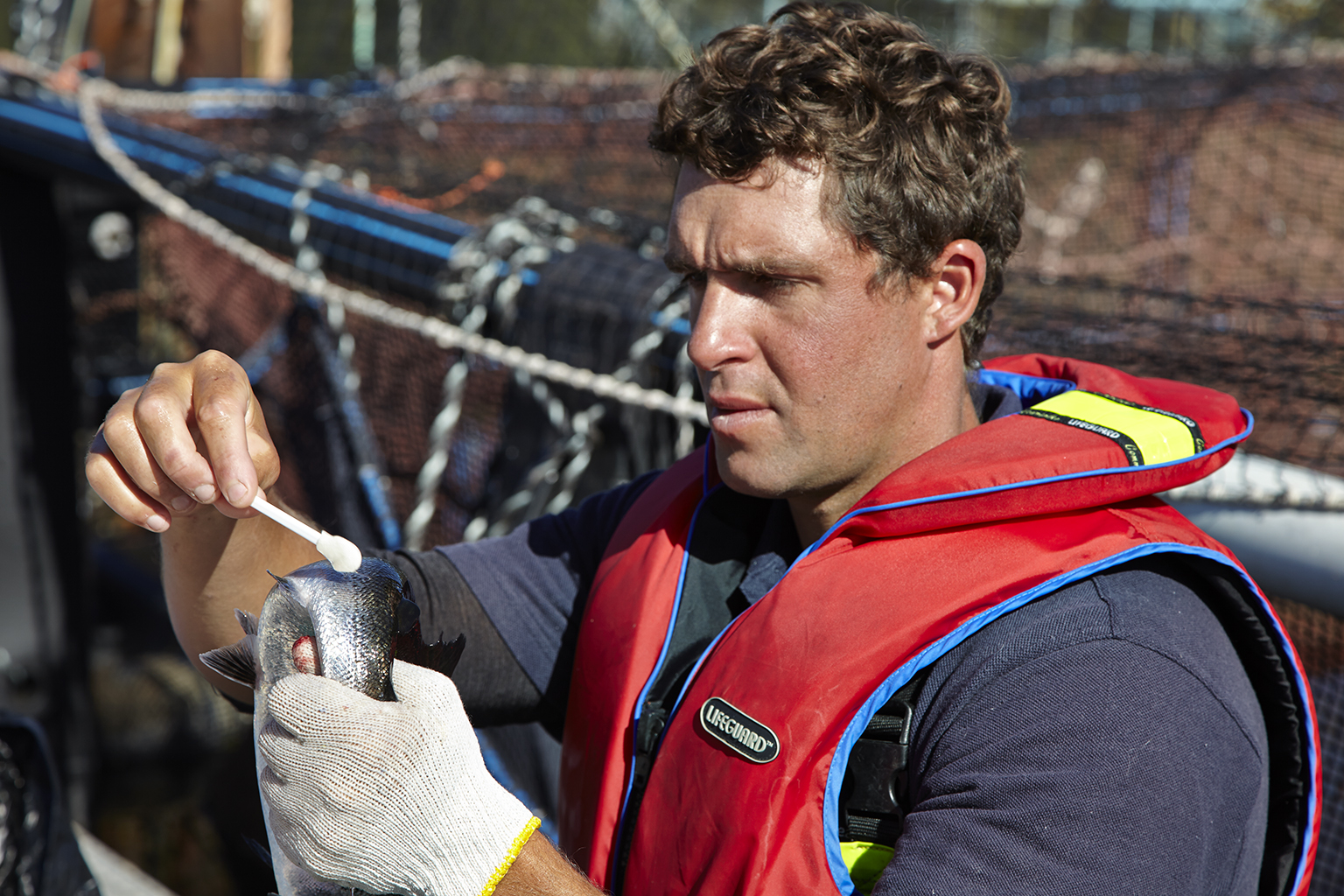 a man on a boat holding a salmon and touching a probe to its gills