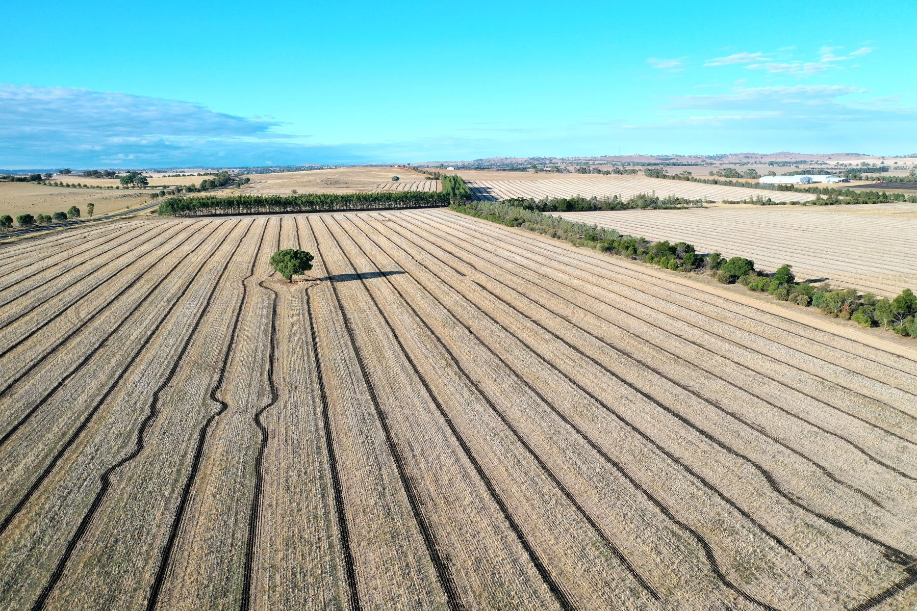 Aerial view showing cropping lines and brown paddocks rimmed with trees
