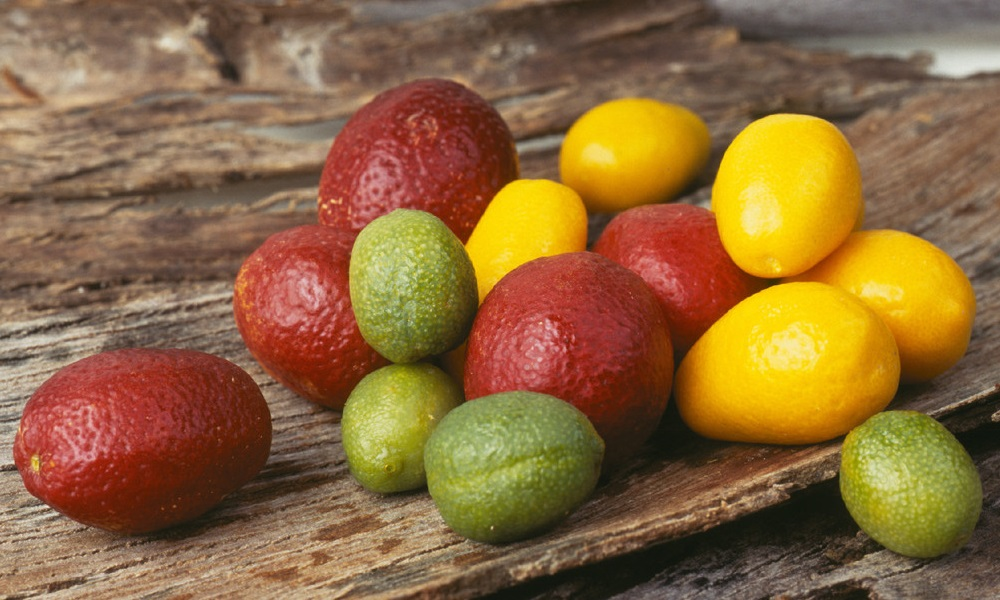 Blood Lime (red rind), Sunrise Lime (yellow rind) and Outback Lime (green rind).