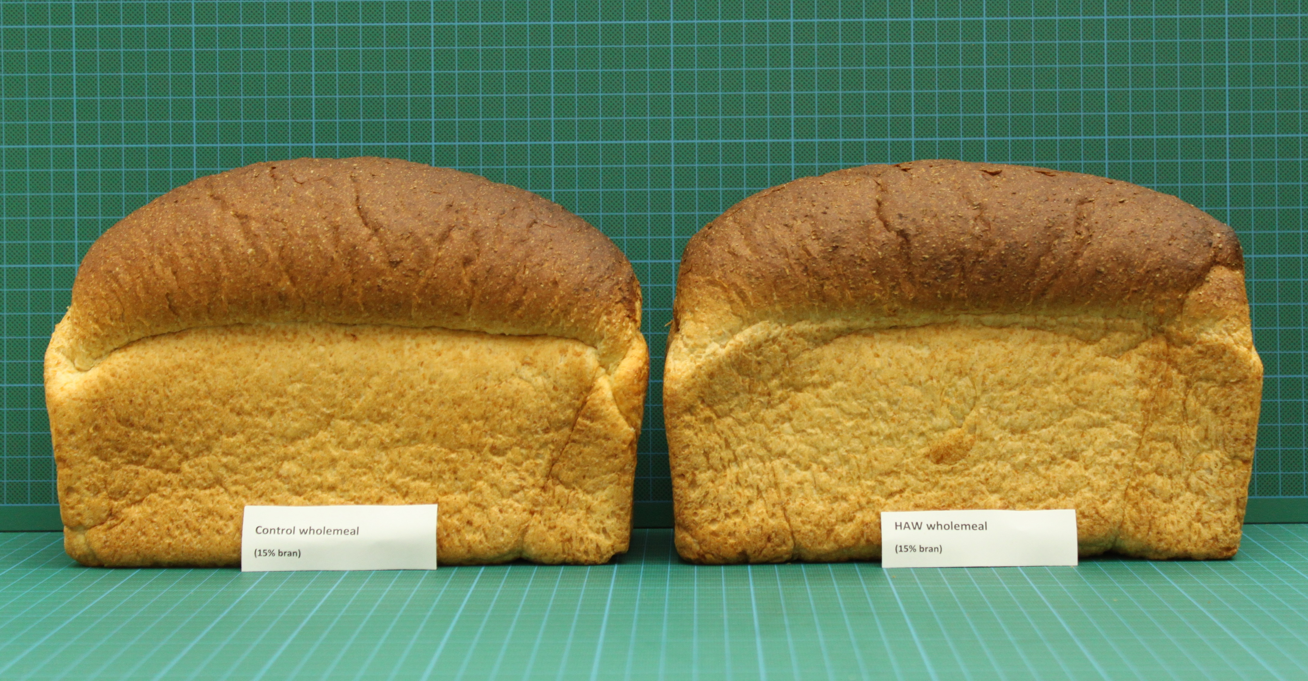 Two loaves of bread: one baked with high-amylose wheat flour and one baked with standard wheat flour. They look very similar