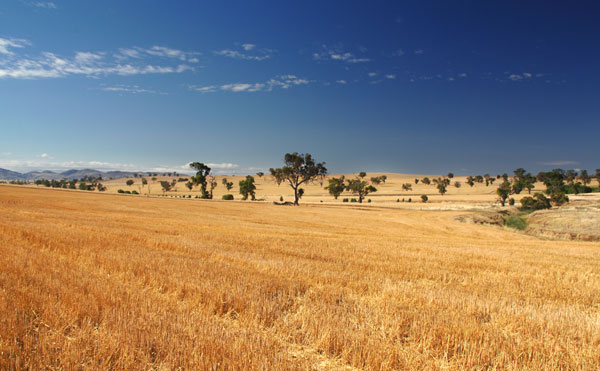 recently harvested wheat field in foreground with trees and hills stretched across the background all under a beautiful blue sky dotted with white clouds.