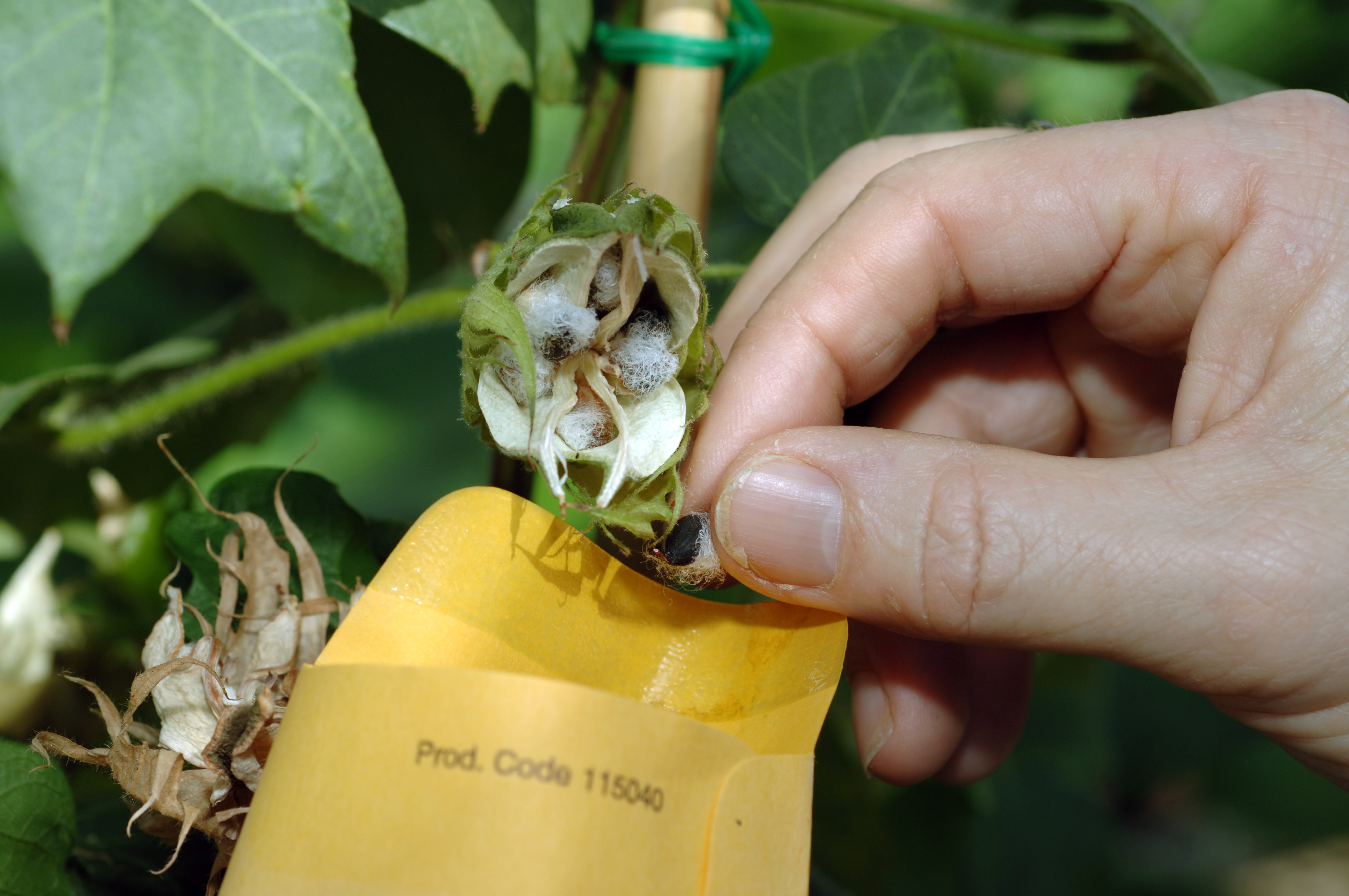Close up view of a hand collecting and placing seeds in an envelope