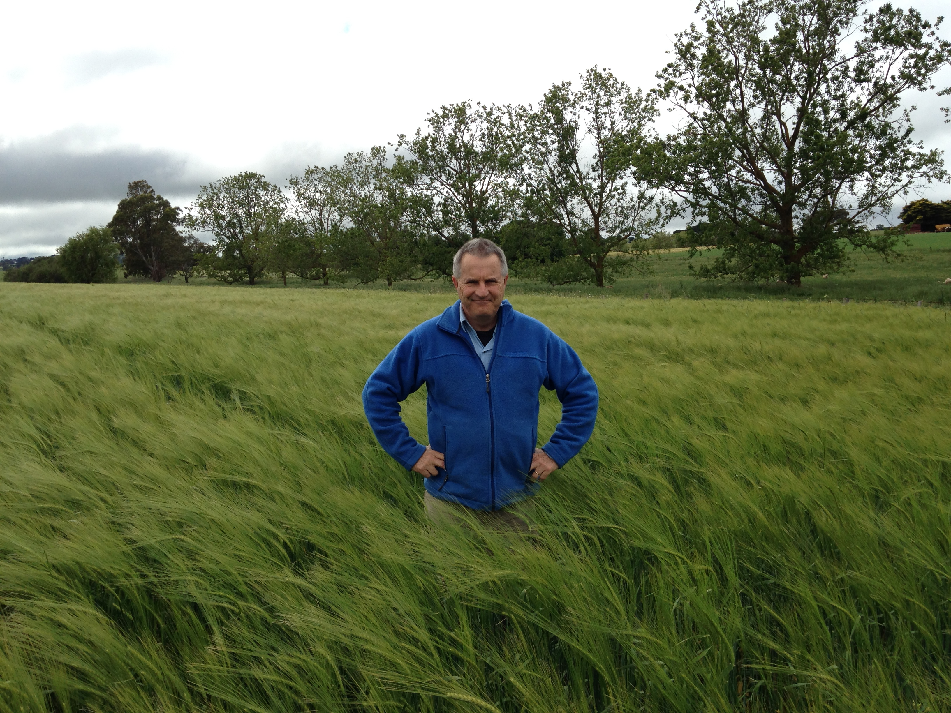 Image of Dr Greg Tanner standing in a field of green barley