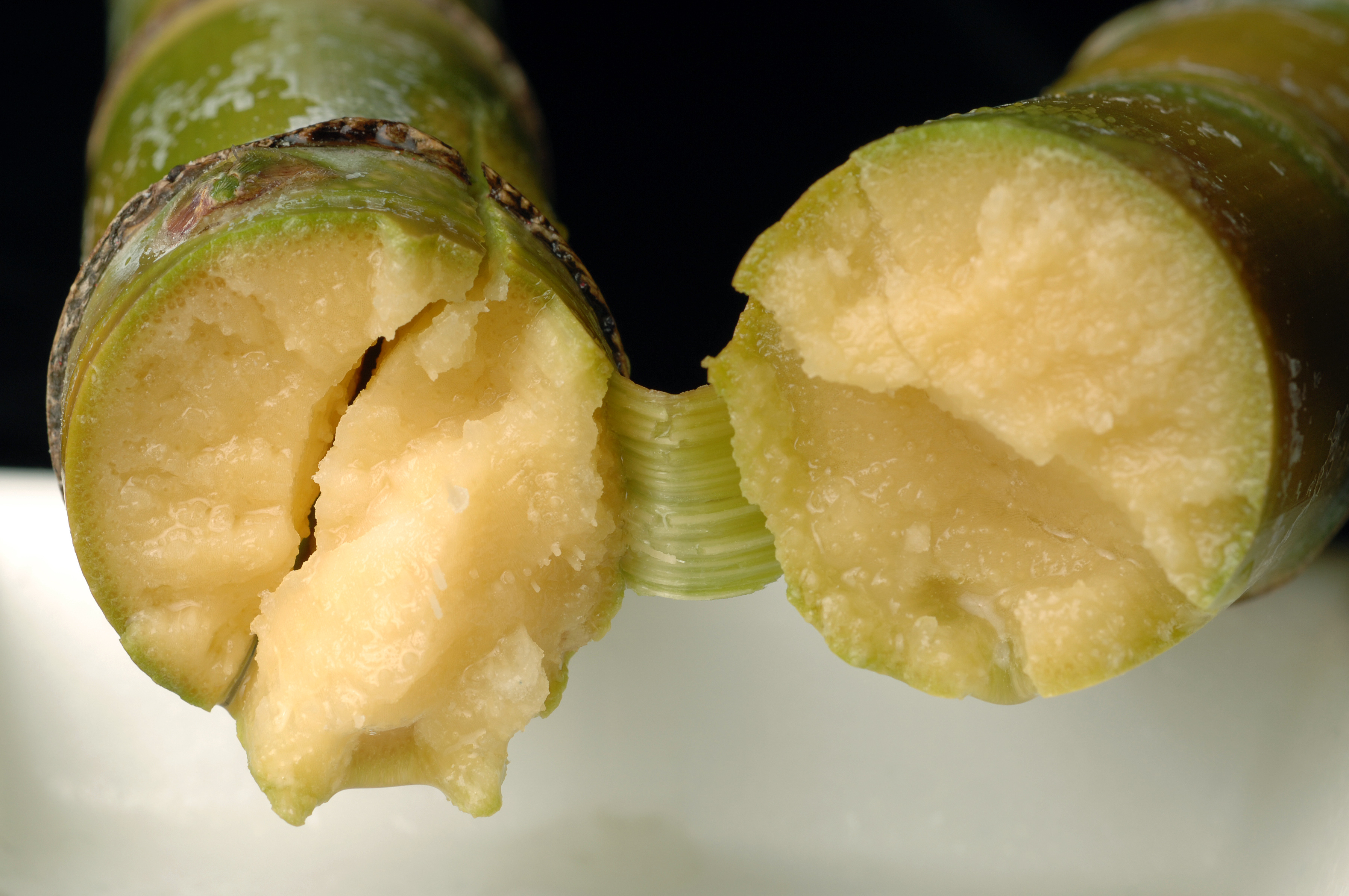 A green sugarcane snapped in two with the two cross-sections facing the viewer. The inside fo the cane looks juicy and grainy in a yellow gold hue.