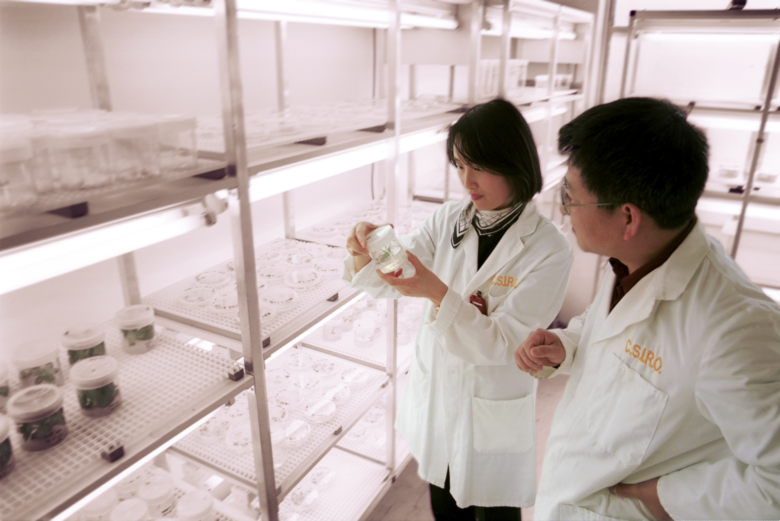 Two researchers in a laboratory looking at a small container in which a barley seedling in growing