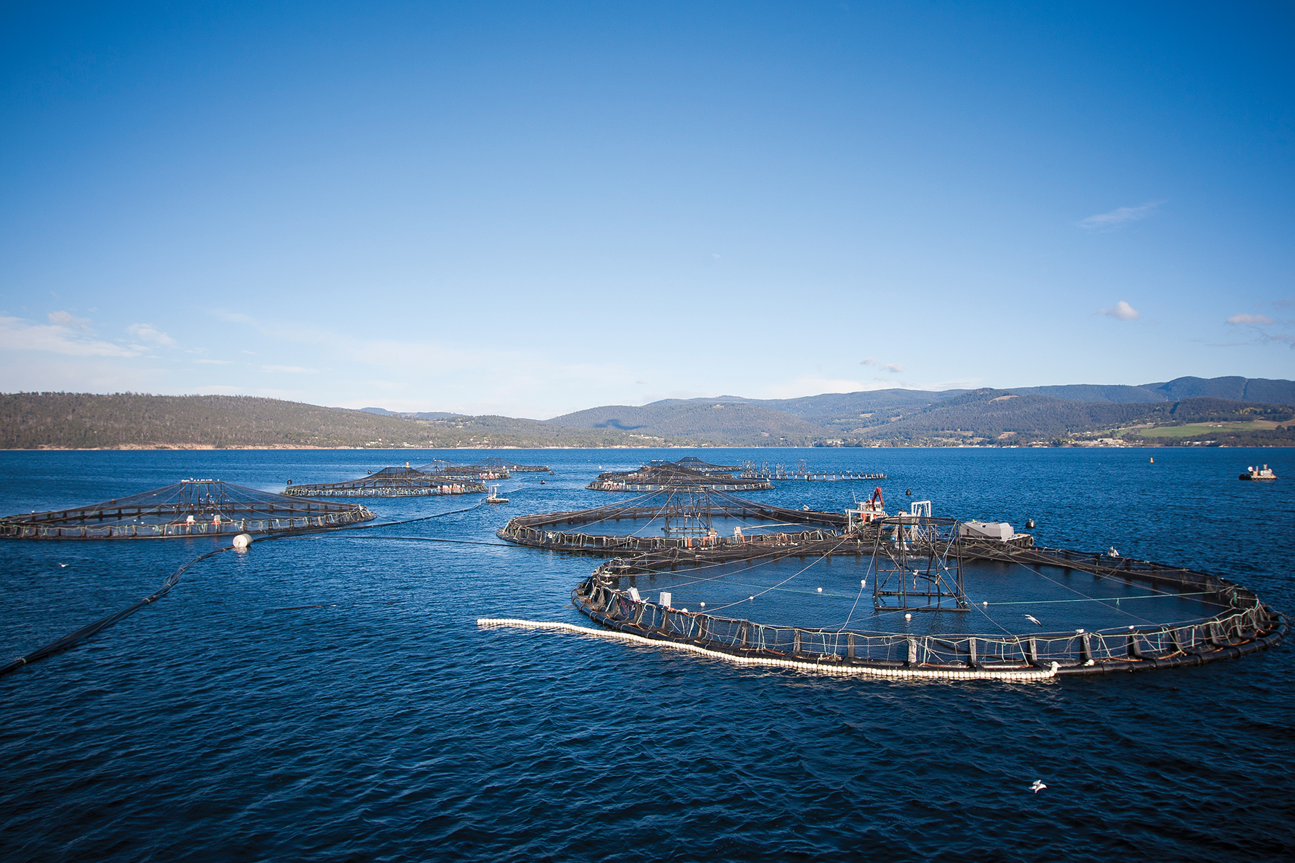 Several salmon farms on water with land in the background.