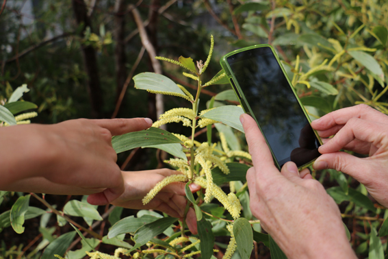 Taking a picture of some flora on a smartphone.