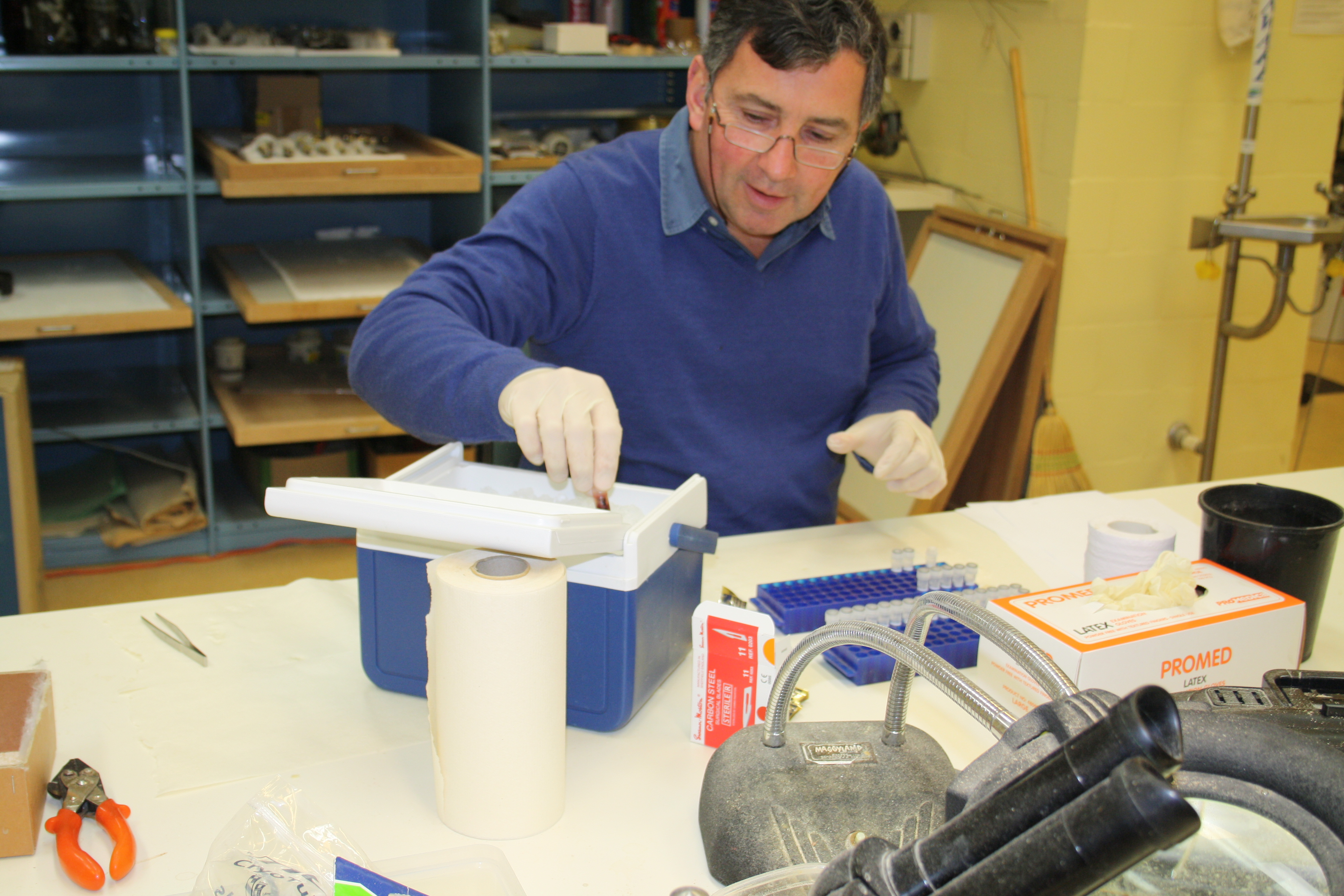 Scientist preparing cryo-frozen tissue samples for DNA analysis.