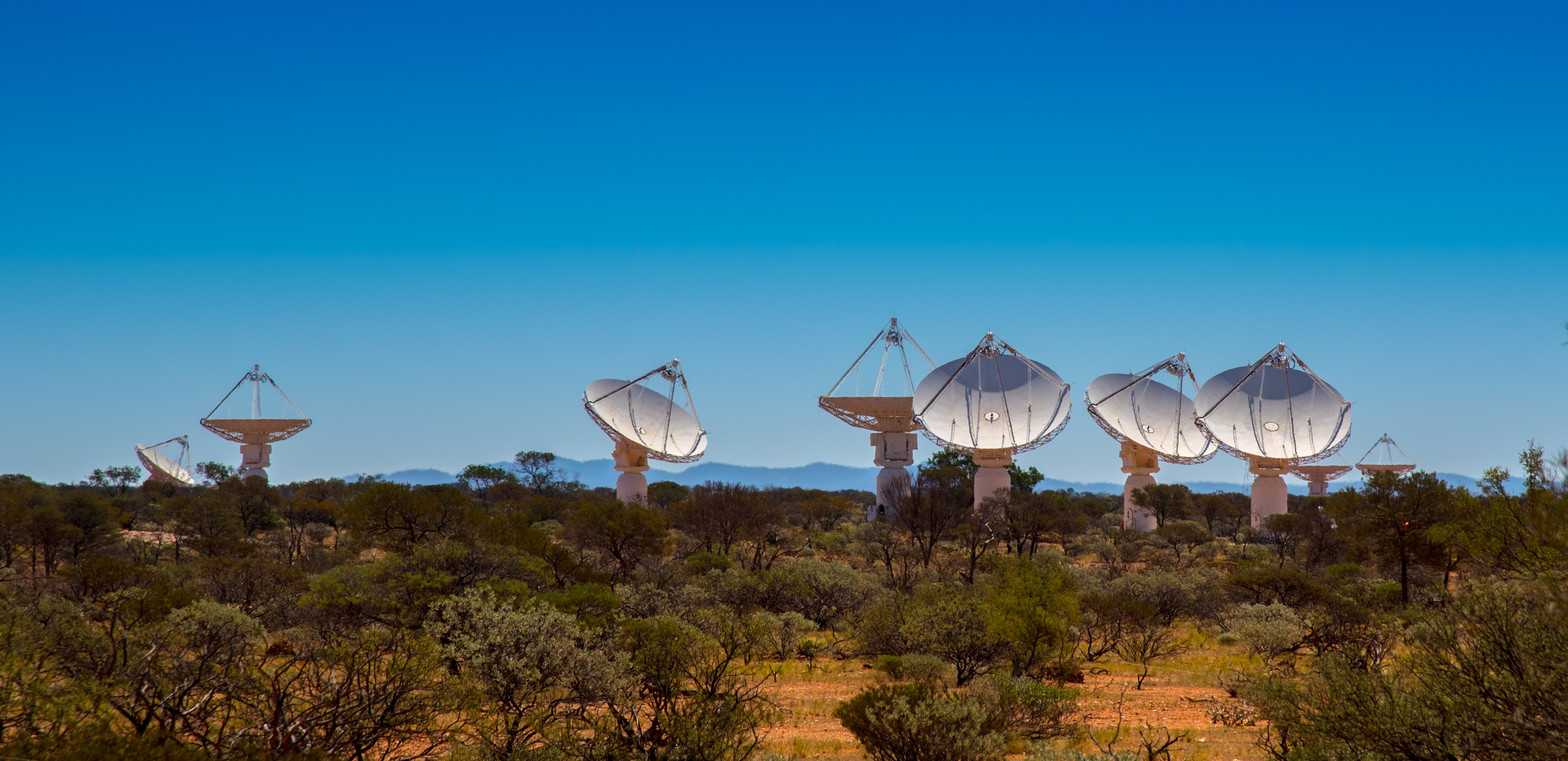 Australian Square Kilometre Array Pathfinder radio telescopes under a blue sky with vegeatation growing in and around the site.