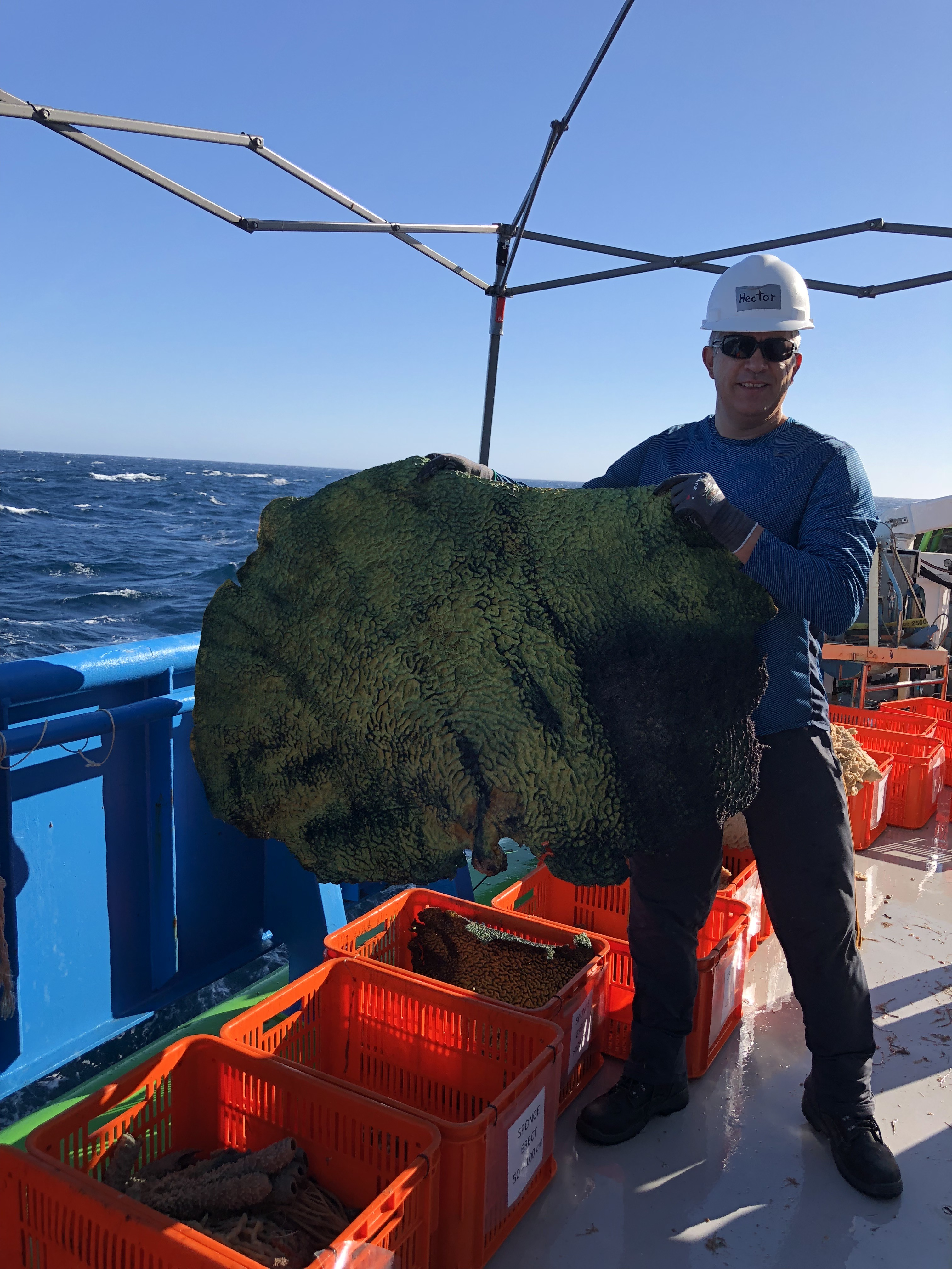 Scientists standing on the deck of the RV Investigator with marine biodiversity samples.