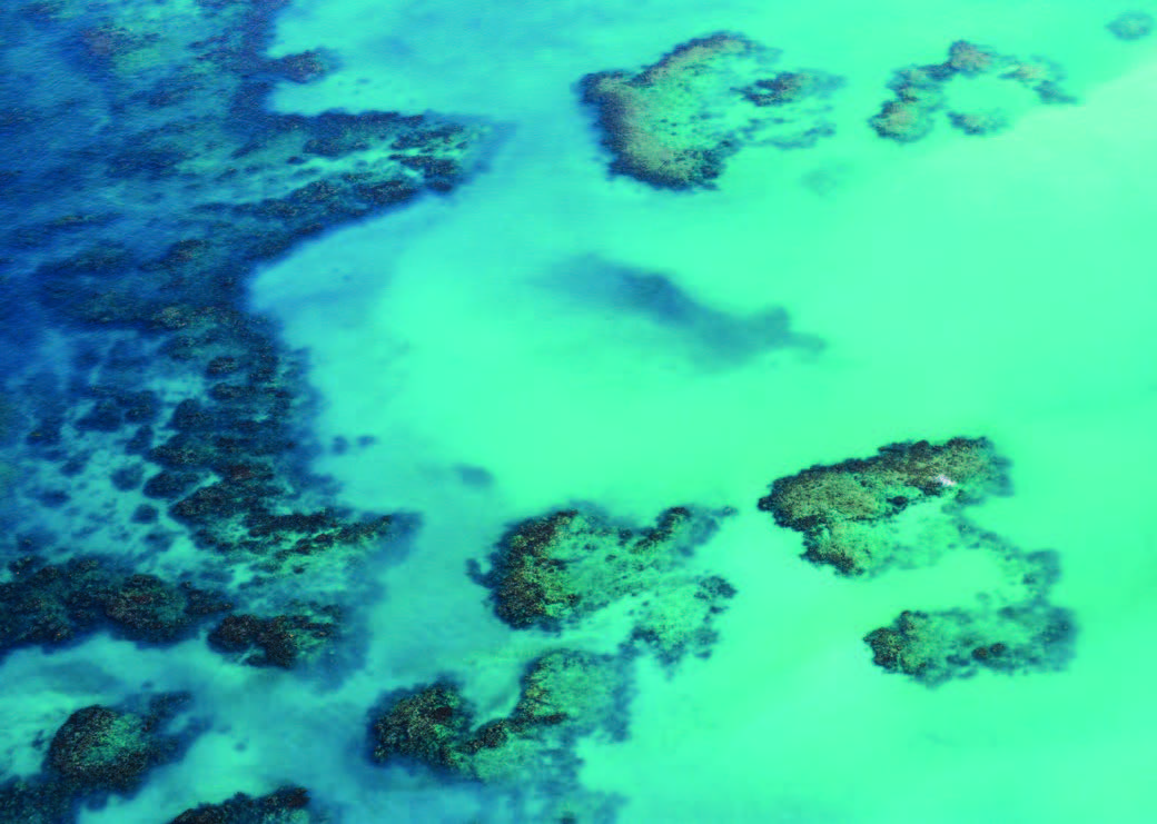 An aerial view of coral in the great barrier reef.