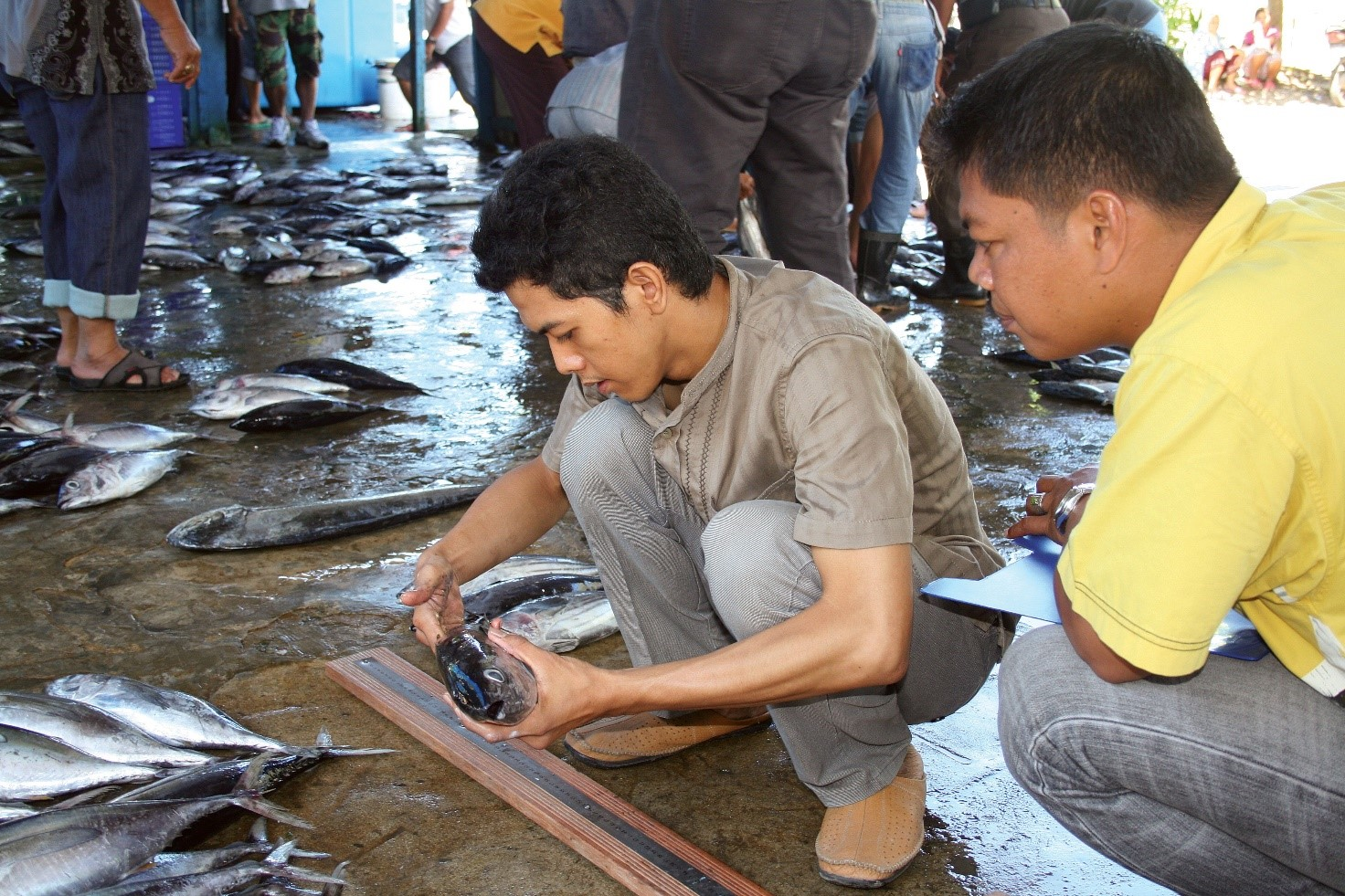 Two men squatting down identifying species of fish at a fish landing site in Indonesia. The men are inspecting a fish and other fish can be seen along the landing site.