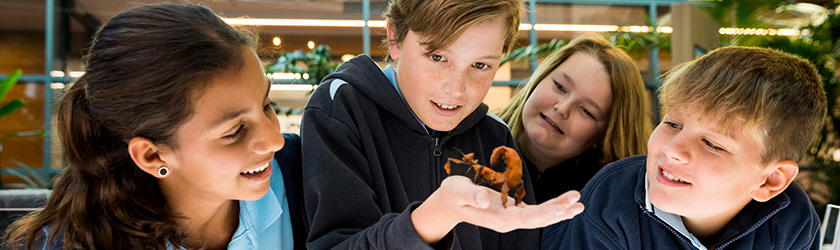 School children observing a prey mantis at CSIRO Discovery