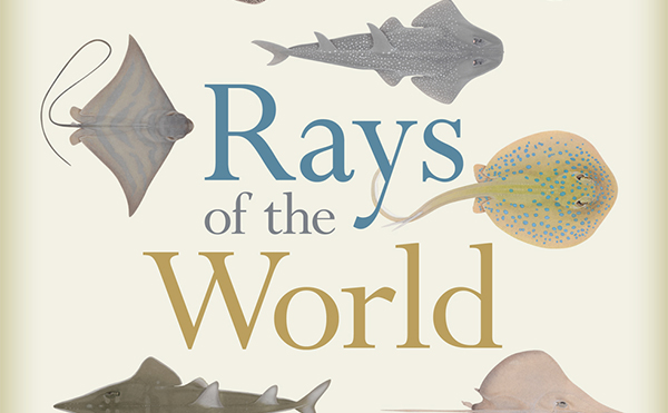 Cover of Rays of the World