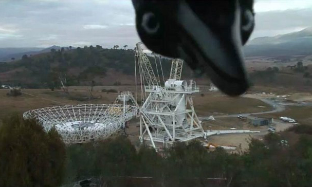 a magpie looking into a camera that is filming a telescope being built