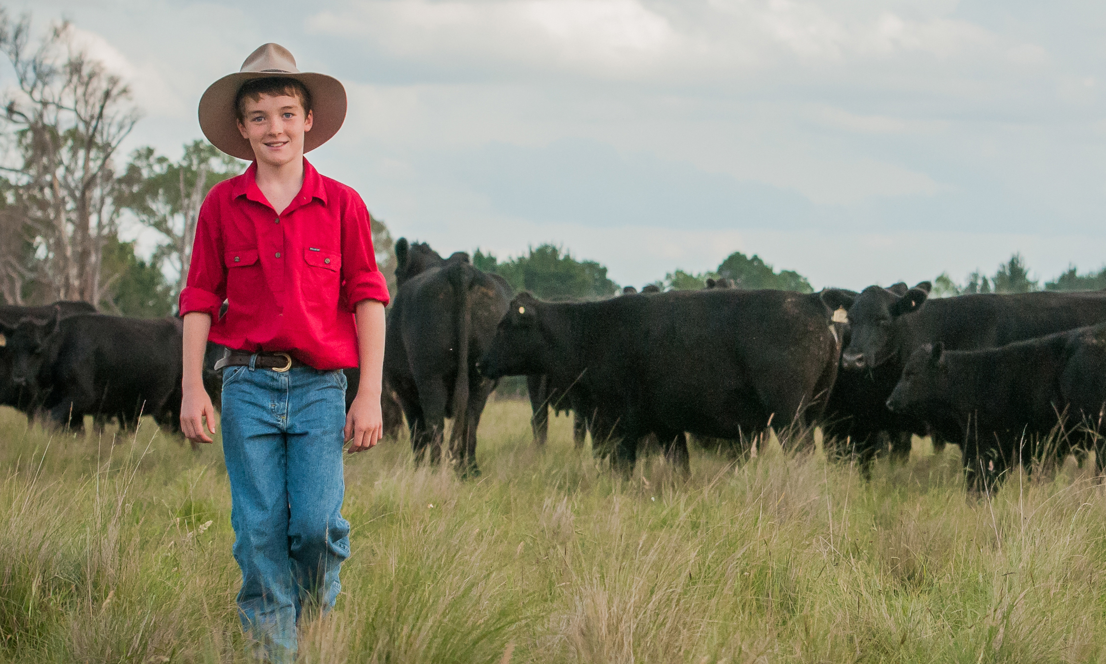 A boy walking through a paddock with cattle in the background