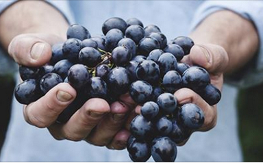close up of hands holding grapes