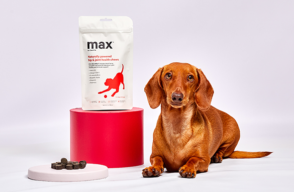 Dog sitting next to a bag of max product by CannPal