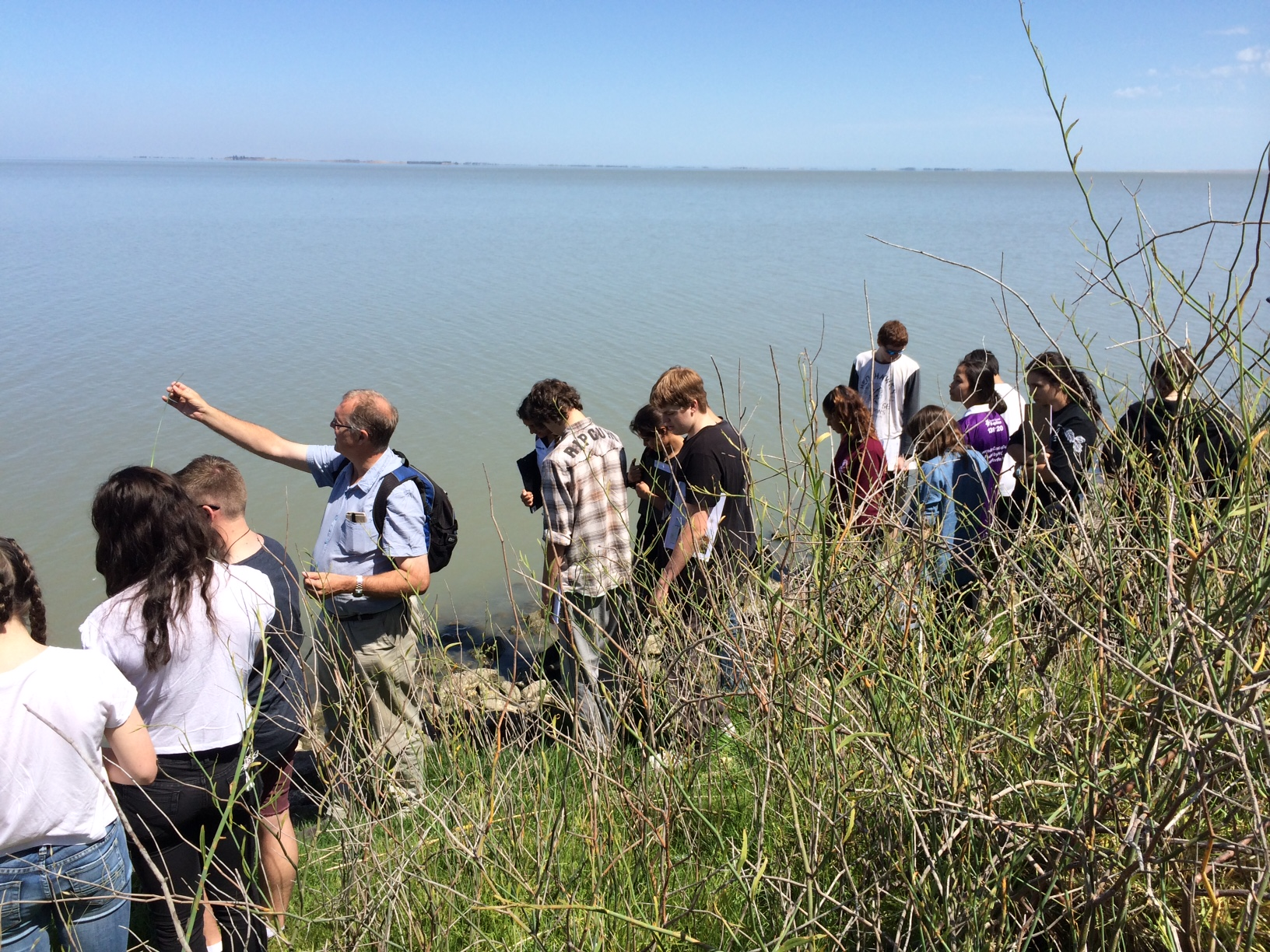 Photograph of students examining reeds growing by the lake at Meningie