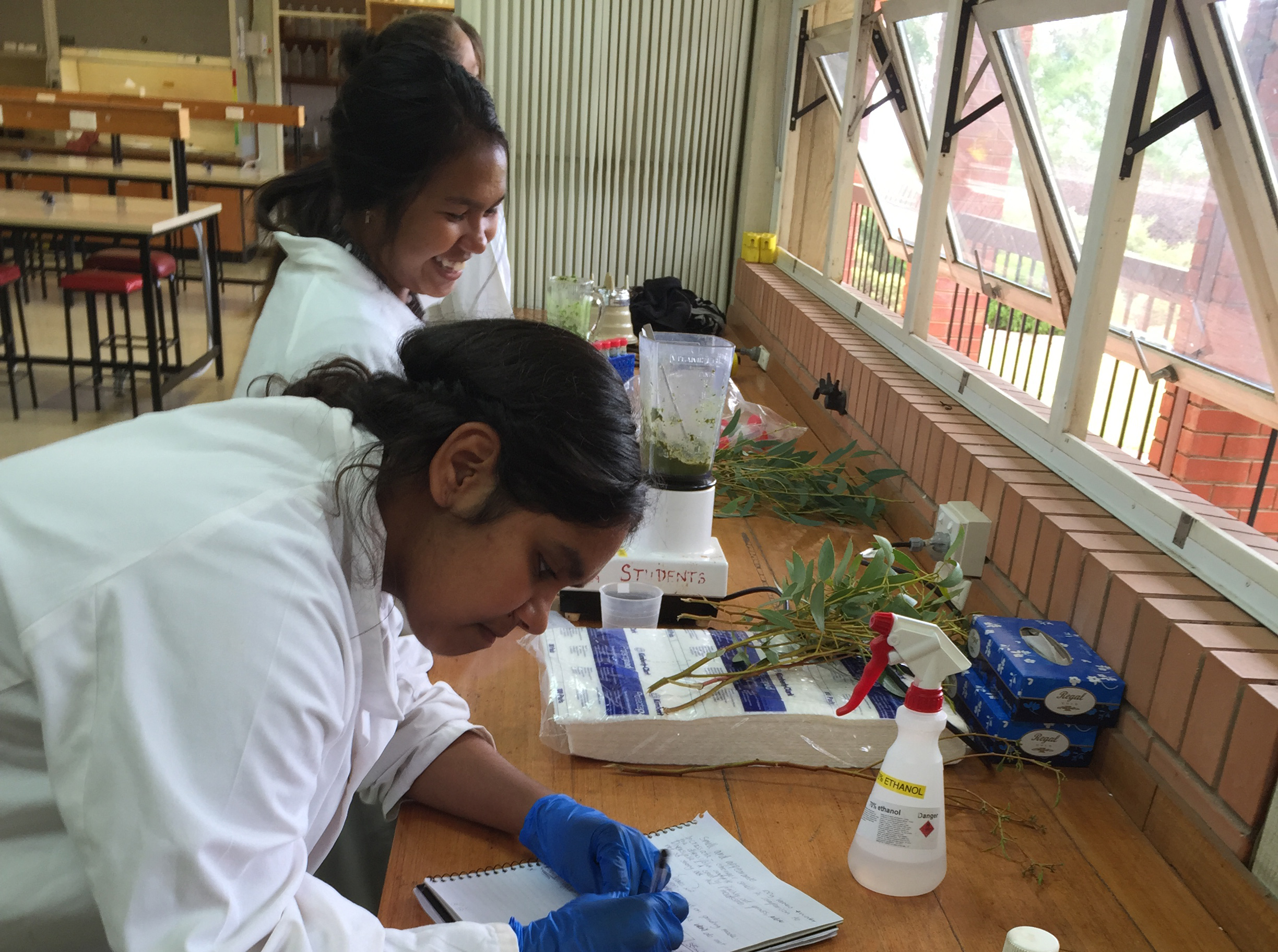 Students investigate anti-bacterial properties of eucalypts
