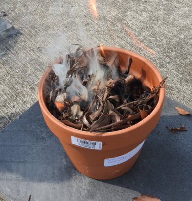 Image of native seeds being treated with a simulated controlled fire in the I2S2 Year 9 Inquiry Burn and Grow