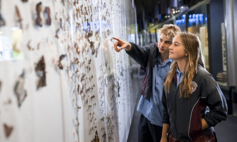 Two teenagers standing next to a large wall which is covered in insect specimens.