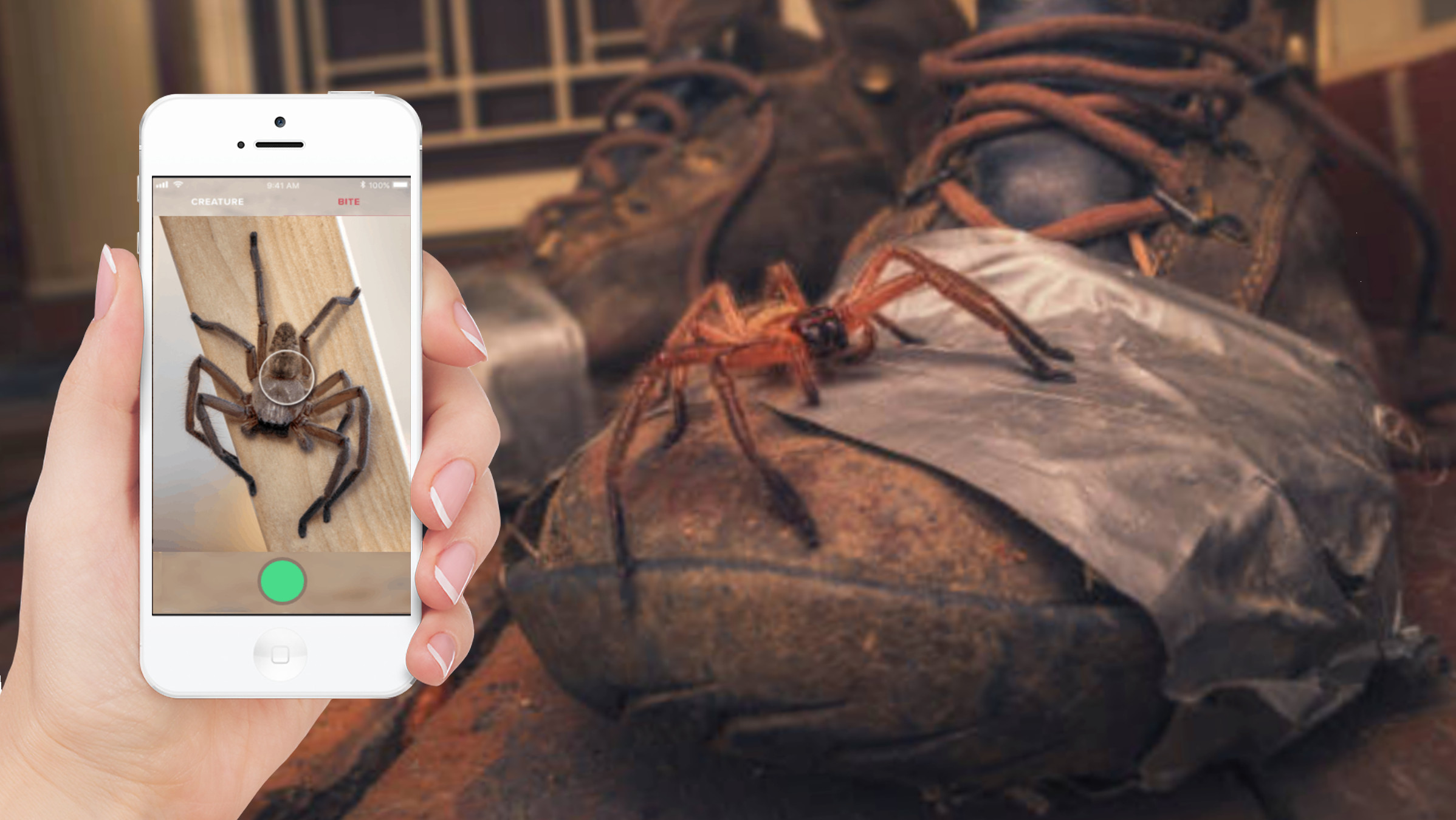 Critterpedia app and spider on boot