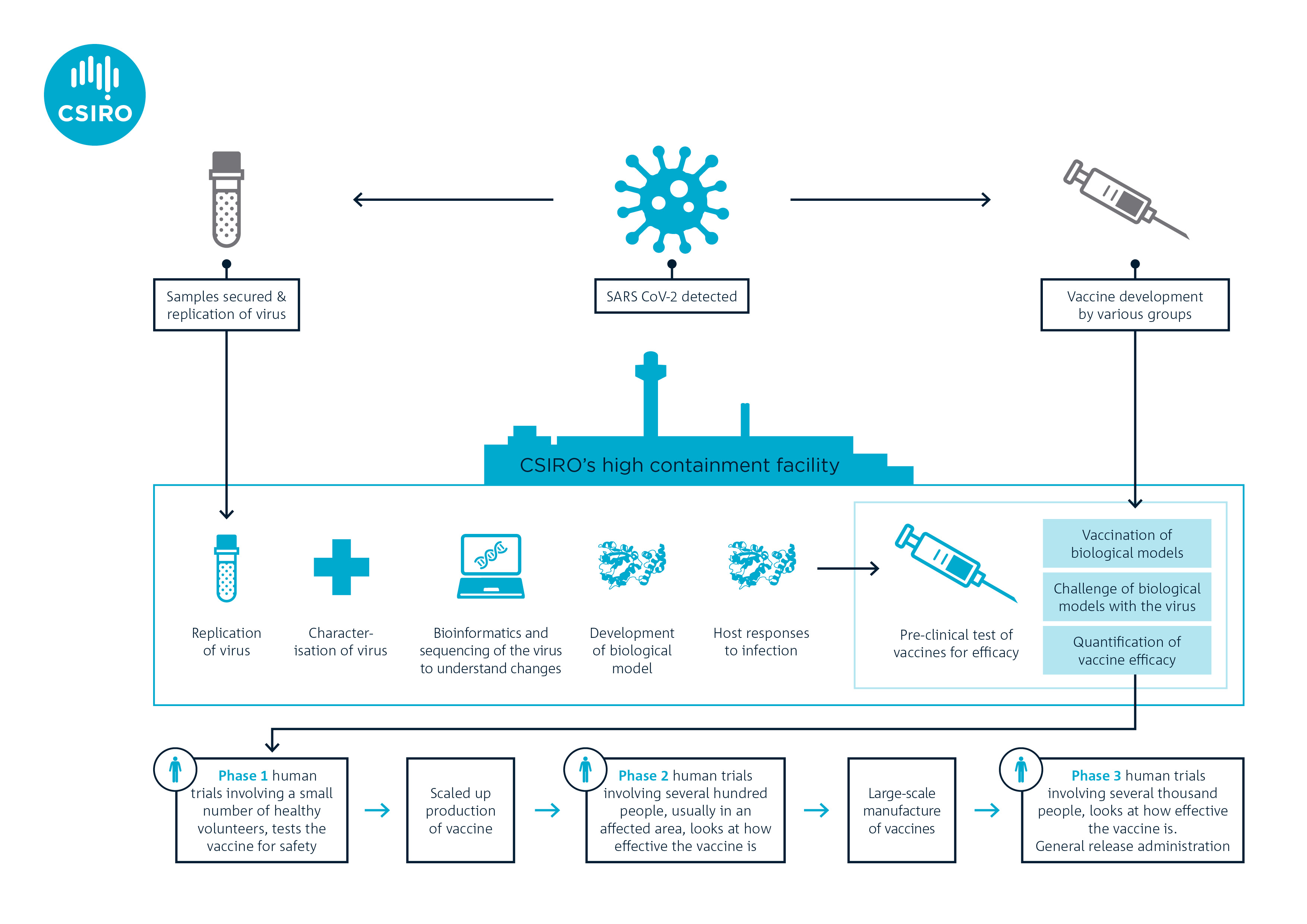 Inforgraphic showing the steps involved in the COVID-19 vaccine development, trials and manufacture.