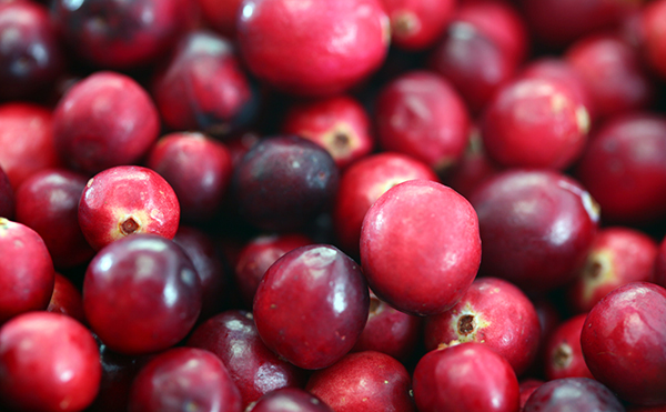 Cranberries grown and harvested in Massachusetts, USA