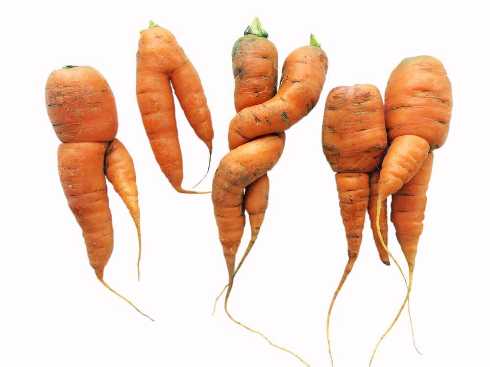 An image of defective carrots that will not reach consumers because they don't meet aesthetic standards set by retailers.