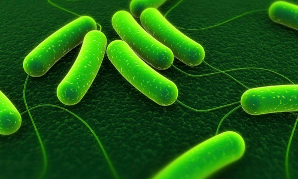 close up of bacteria under fluro green light