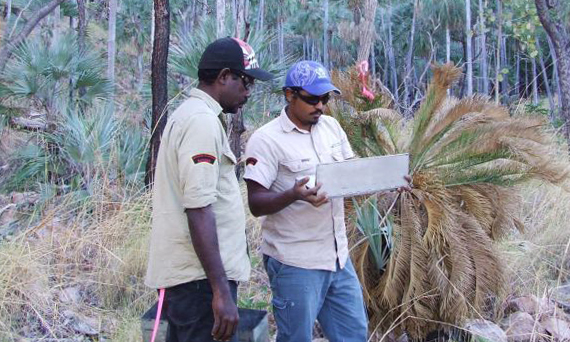 Two Indigenous rangers standing in the bush with a laptop