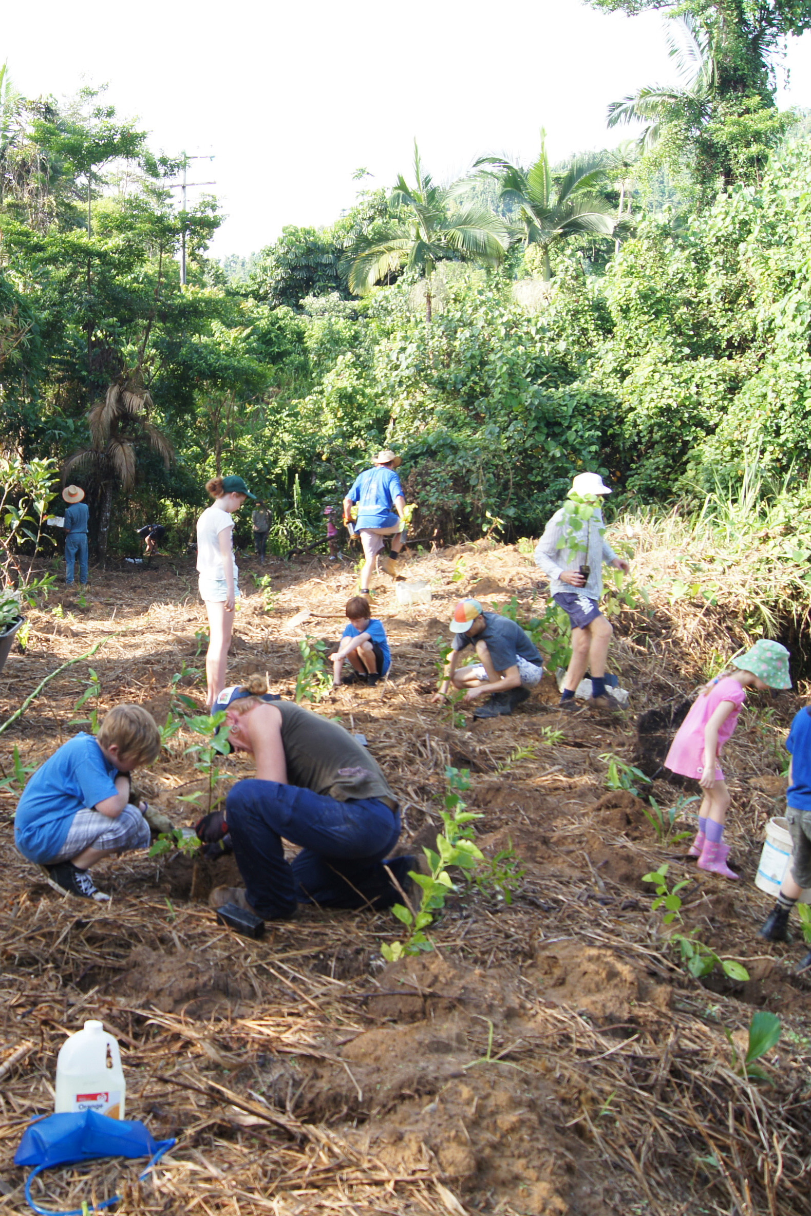 A group of people planting trees