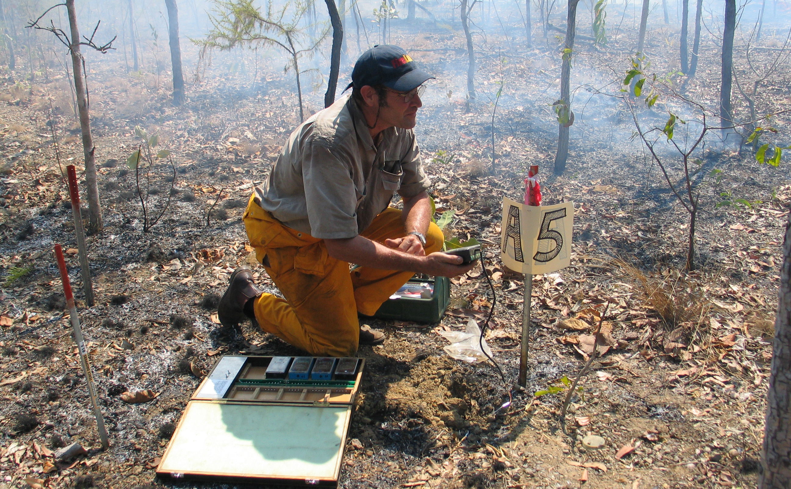 A man with a measuring device in an experimental plot that has just been burned